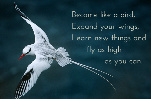 "bird with message ""become like a bird, spread your wings, learn new things and fly as high as you can"""