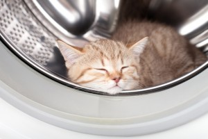 sleeping kitten lying inside laundry washer